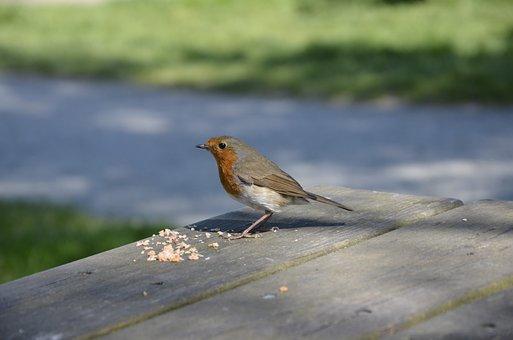 ロビン, Redbreast, 自然