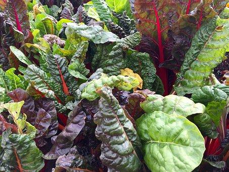 Swiss Chard, Leafy Greens, Chard, Leaves