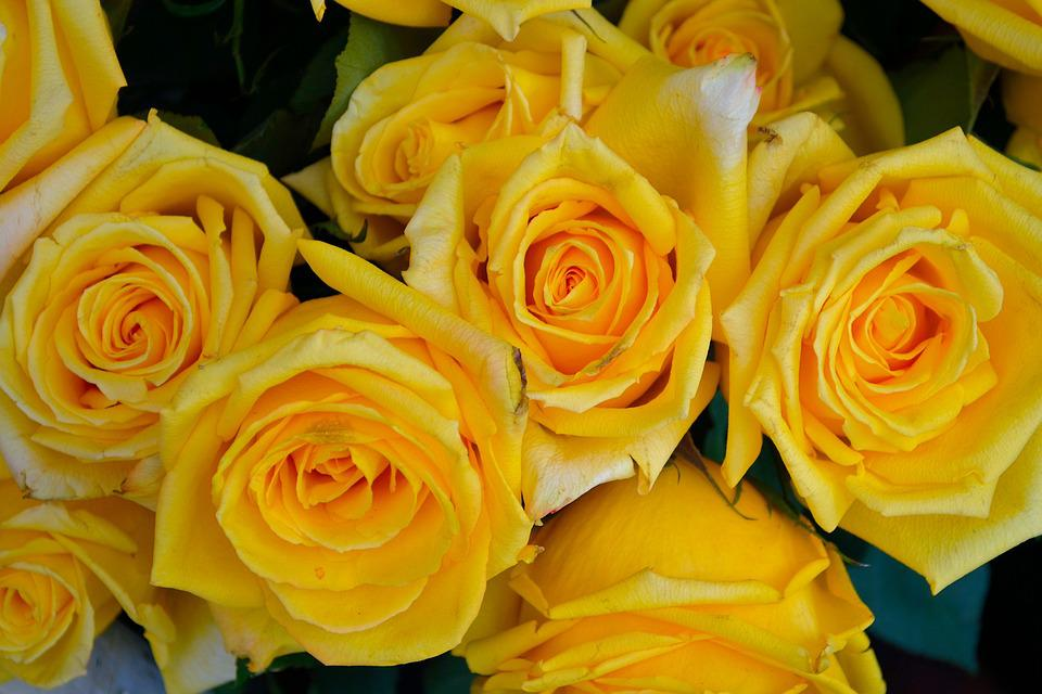 Berühmt Gelbe Rosen Blumen Natur - Kostenloses Foto auf Pixabay #HU_69