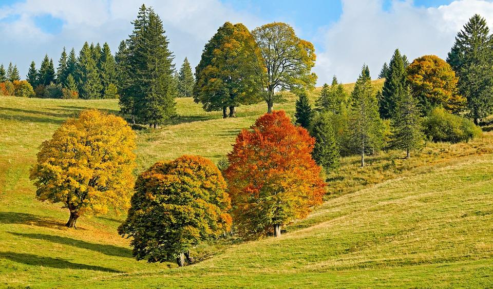Autumn forest trees free photo on pixabay for Paesaggi autunnali per desktop