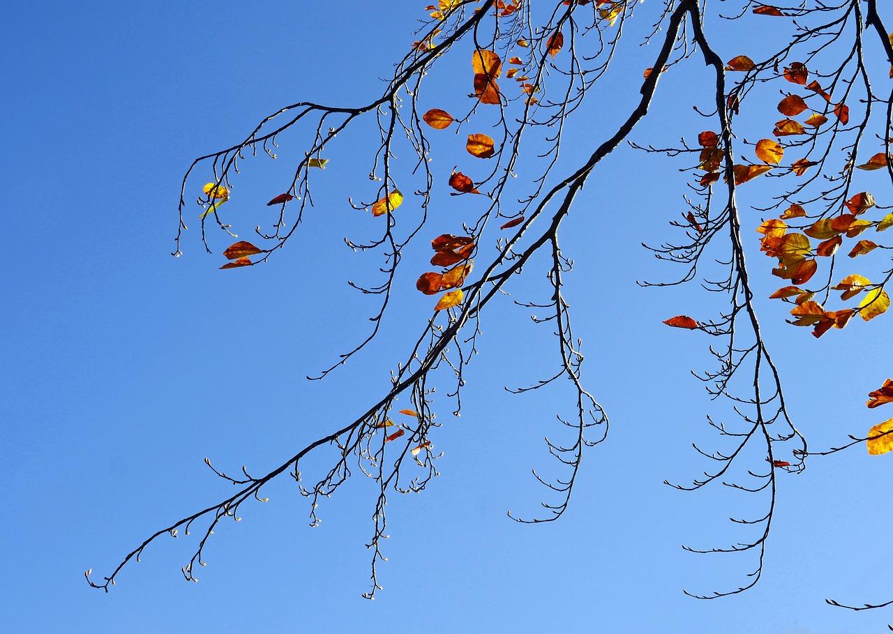 разные сухофрукты, осенние деревья ветка картинки того