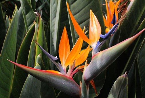 Virág Paradicsommadár, Növényvilág - krónika