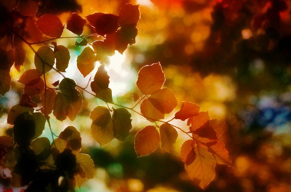 Hösten, Blad, Ljus, Färger, Nature, Skog, Hösten Guld