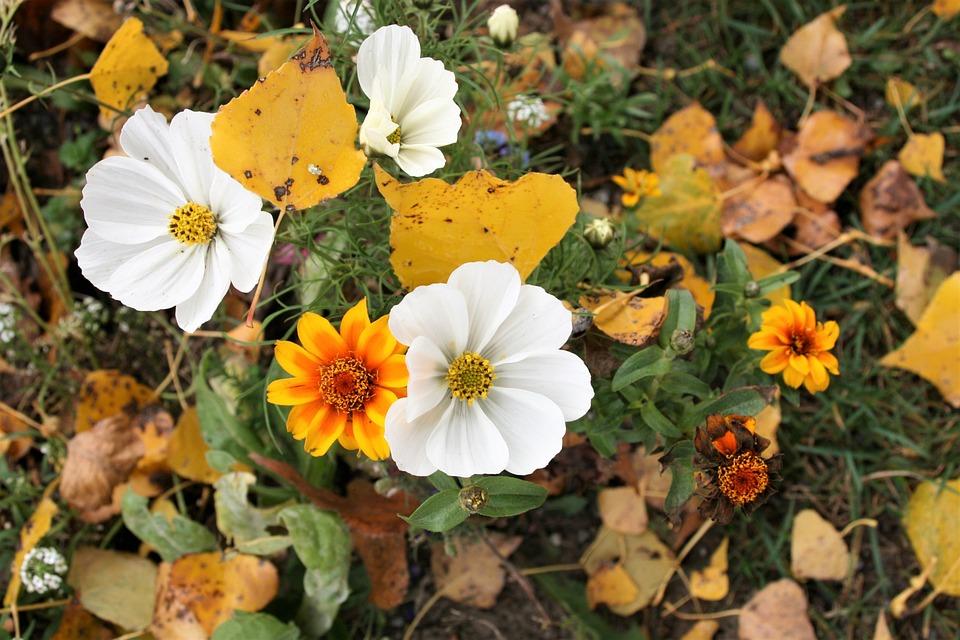 Anemonen Pflanzen Weisse Blumen Kostenloses Foto Auf Pixabay