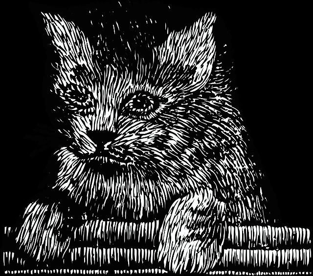 Картинки котиков в графике