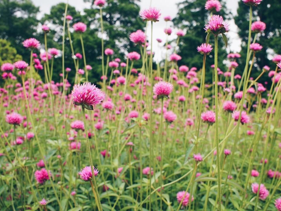 Botanical Garden Philadelphia   Free Photo On Pixabay