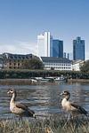 entirely, frankfurt, river