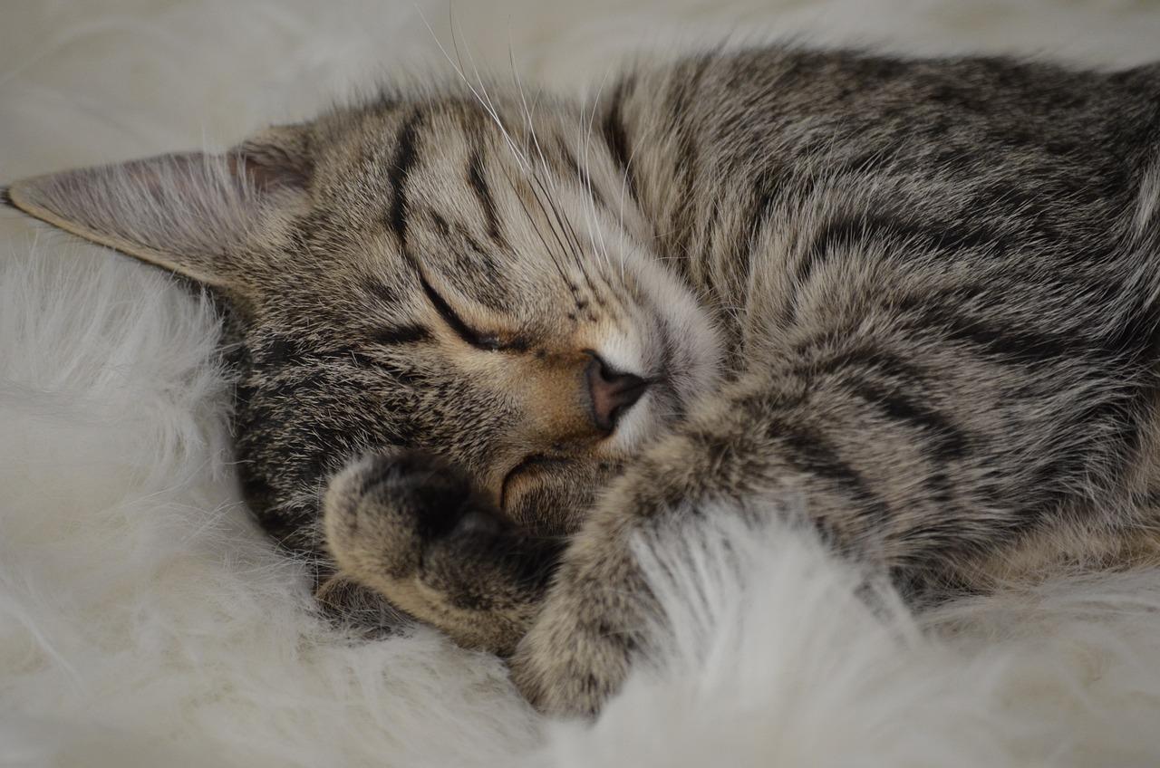 Сладкий сон картинка фото