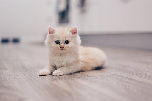 Katze, Kätzchen, Niedlich, Tier, Katzen