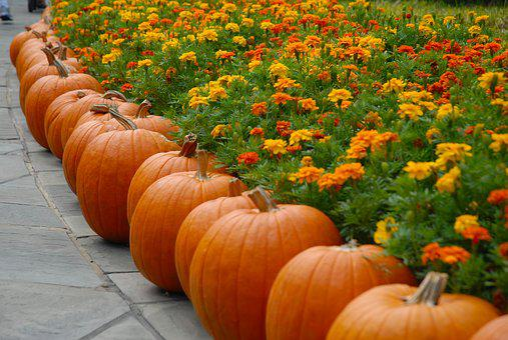 Pumpkin, October, Halloween, Autumn