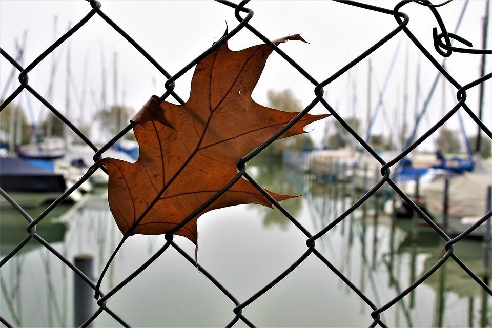 Free photo: The Moat, Wire, Fencing, Dry Leaves - Free Image on ...