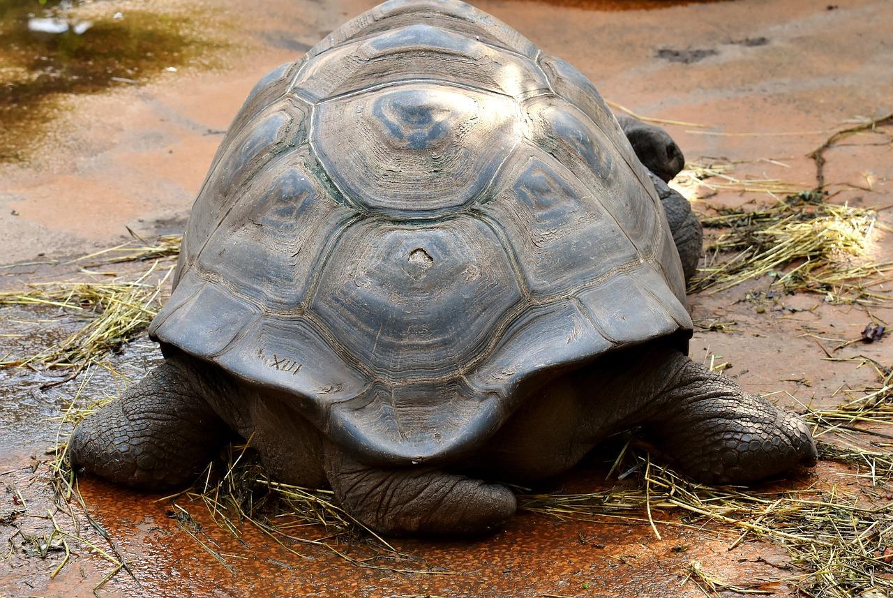 видео, используя фотографии гигантских черепах всего спектр освещаемых