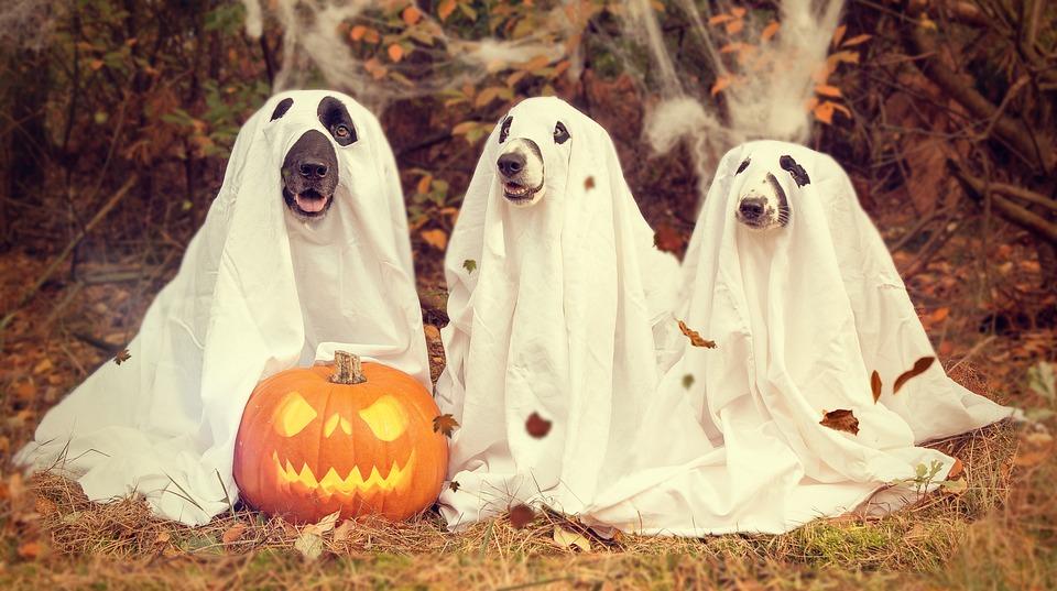 Halloween, Kürbis, Zierkürbis, Gruselig, Kürbis Herbst