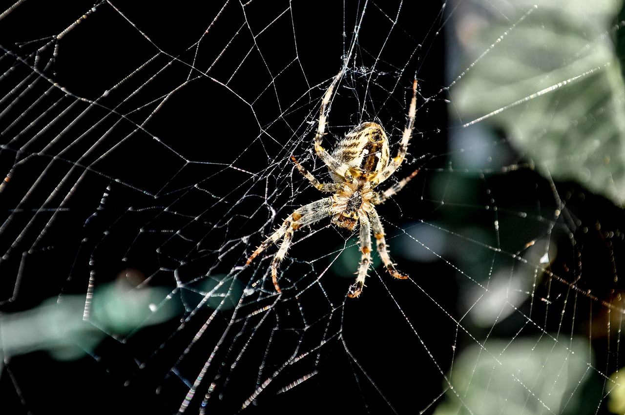как фотографировать пауков тройной дистиллят