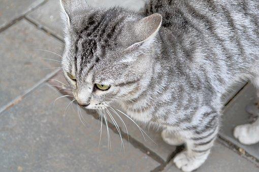 Pěkná chlupatá kočička videa