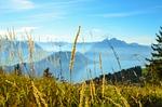 blade of grass, switzerland