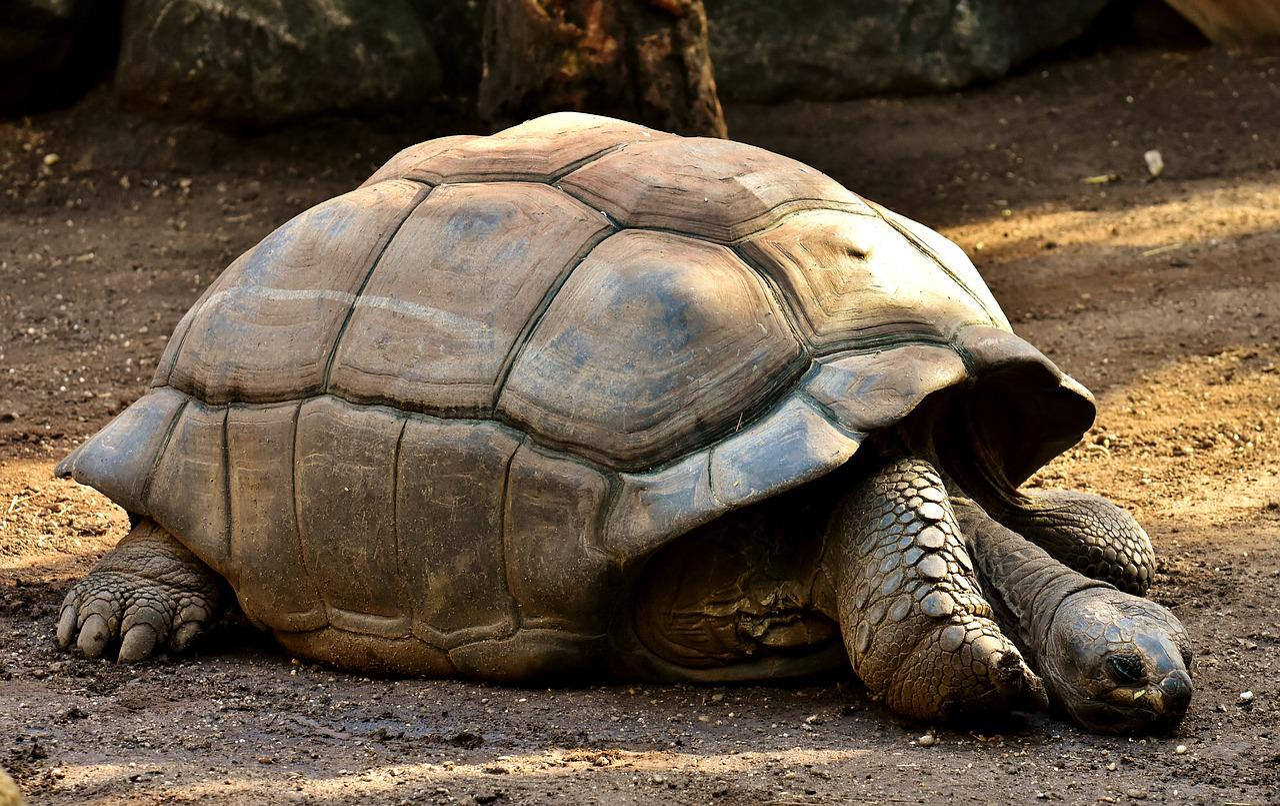 фотографии гигантских черепах что