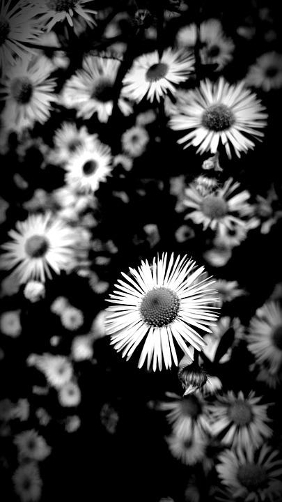 Flowers Black And White Nature