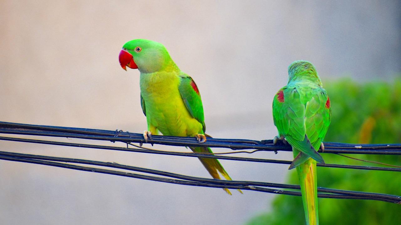 Покажите попугаев на картинках