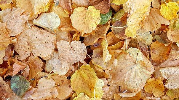 Texture, Background, Fall Foliage