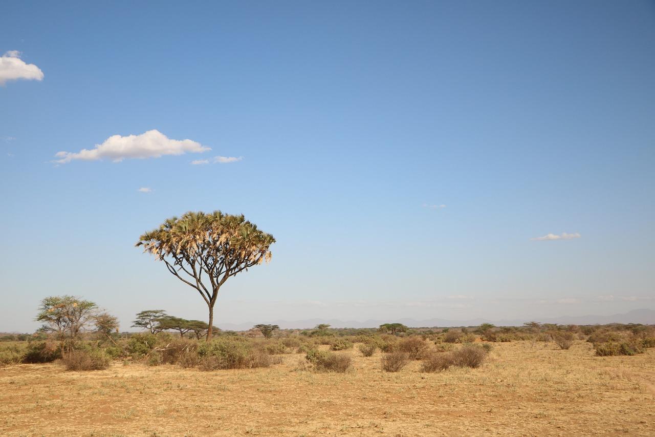 отдыха картинка природа африки без животных одного троса десятки