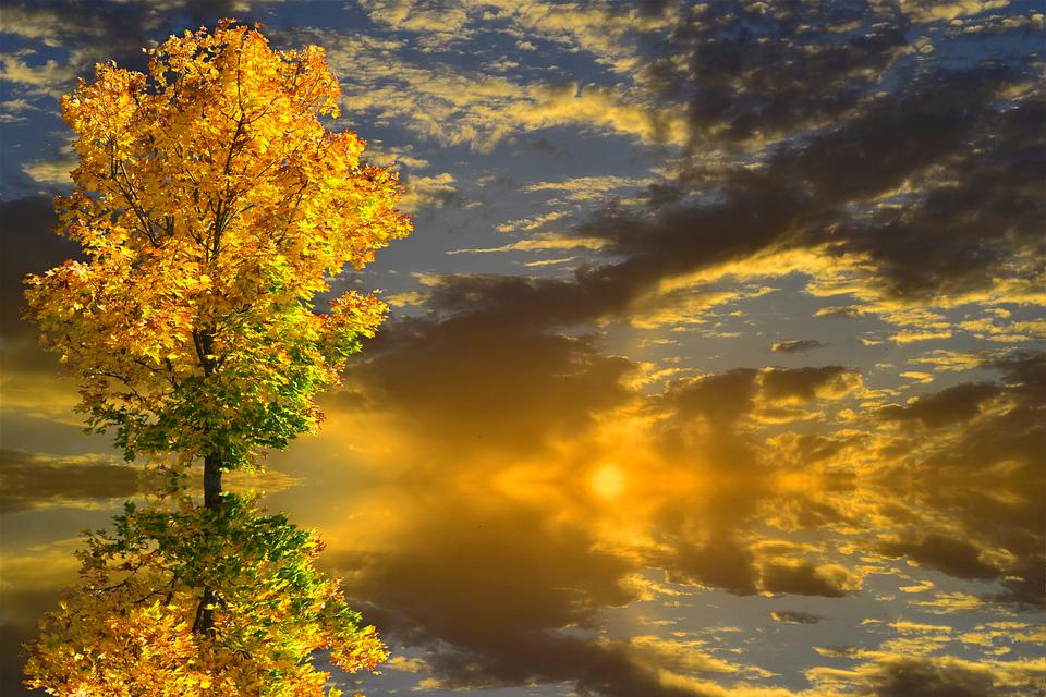 https://cdn.pixabay.com/photo/2017/10/21/19/29/autumn-2875621_960_720.png