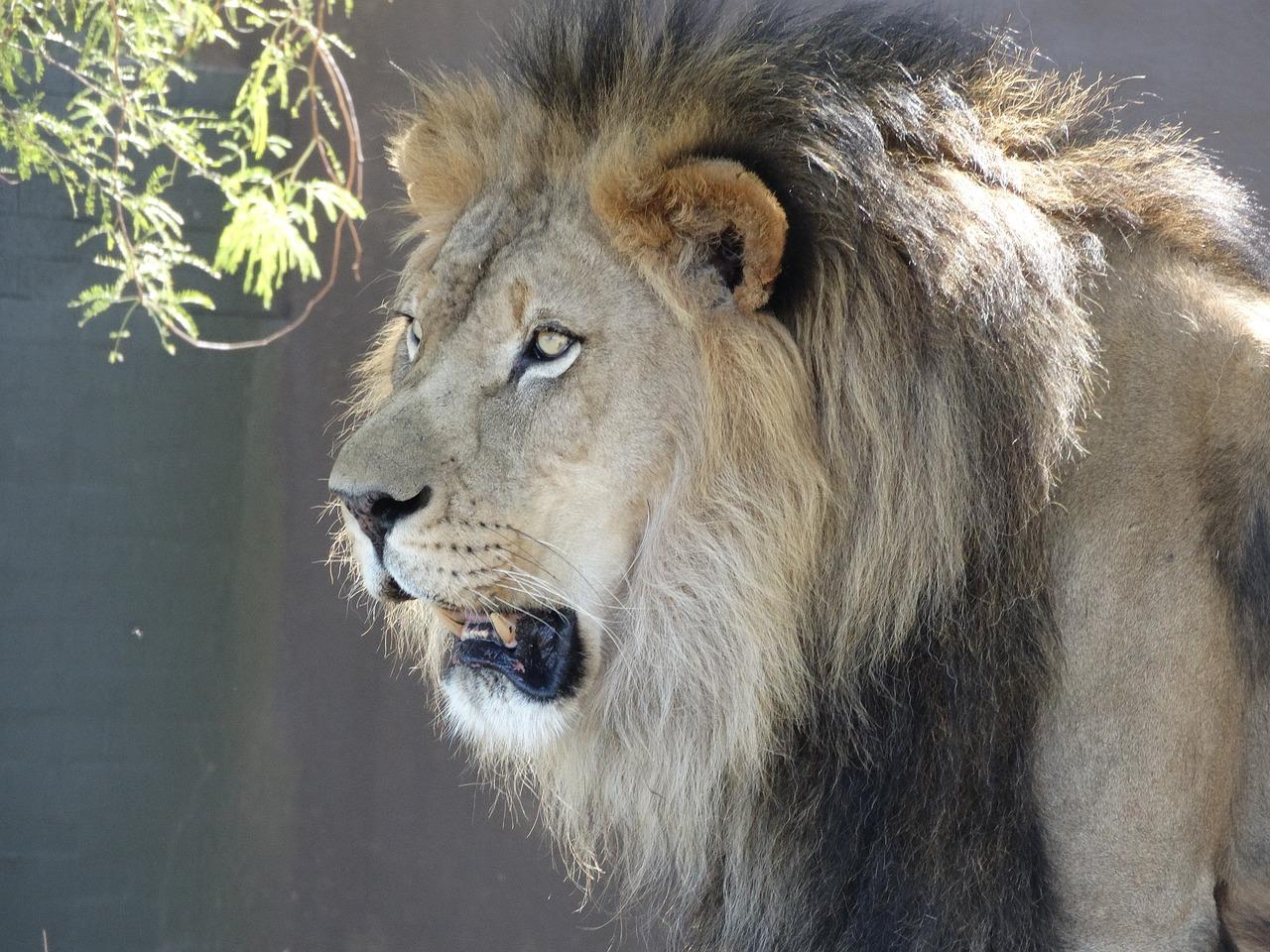 изменении живая картинка лев каждом конкретном магазине