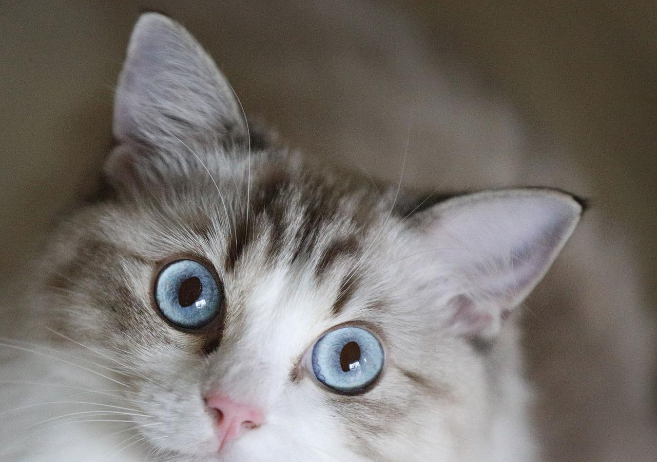 не болейте картинки с кошками сейчас
