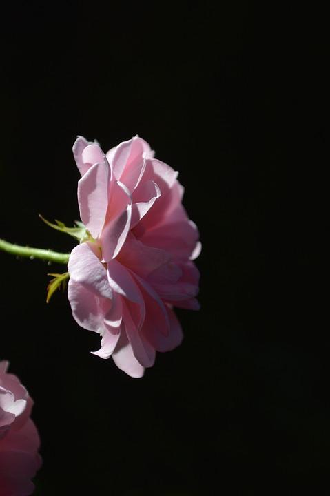 Roses Lovely Day Free Photo On Pixabay