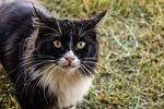 cat, feral, feline