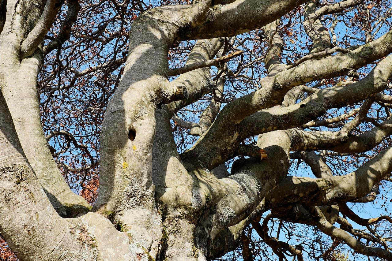 Мужское дерево фото название