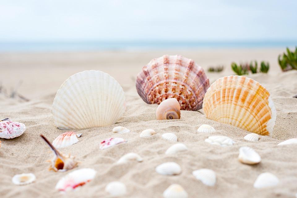 Beach, Sabbia, Ocean, Mare, Estate, Vacanza, Acqua
