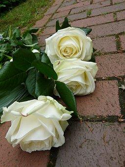 Ruže, Biela, Pohreb