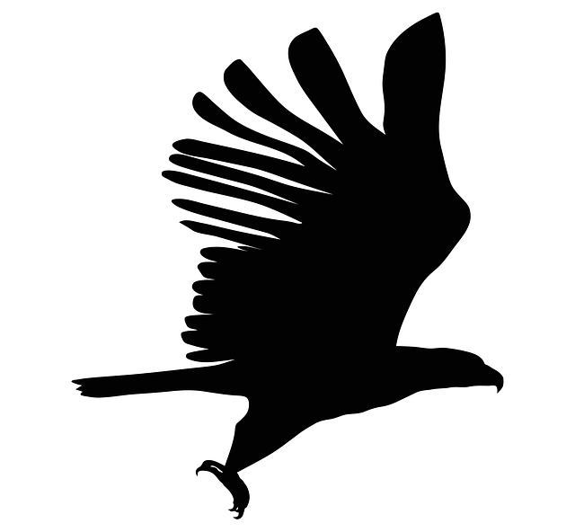 eagle silhouette bird 183 free vector graphic on pixabay