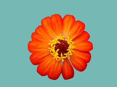 オレンジ色の花, 春, 花, 花びら, お店, オレンジ色の花びら, 庭