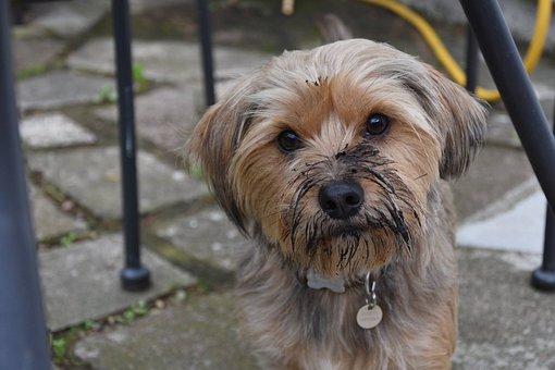 Muddy Cão, Animal De Estimação, Suja