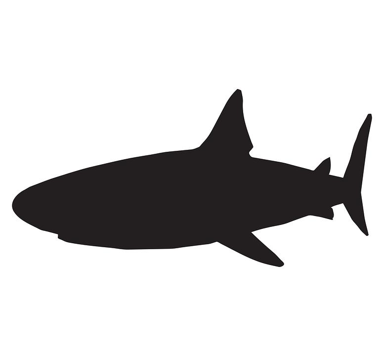 Download 520 Koleksi Gambar Vektor Ikan Hiu HD Gratis