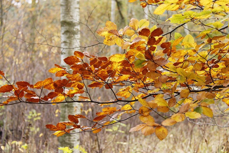 Лес Осень Дания Осенние - Бесплатное фото на Pixabay