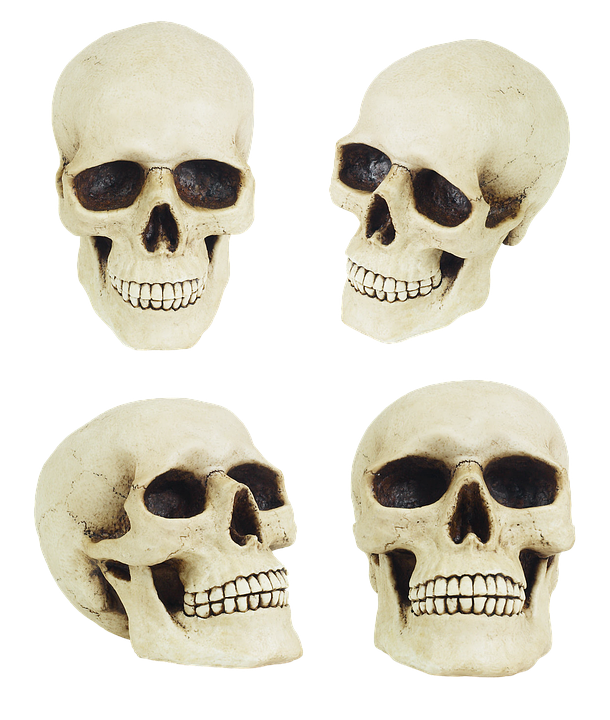 Skull Anatomy Jaw Free Photo On Pixabay