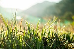 close up, crop, dew