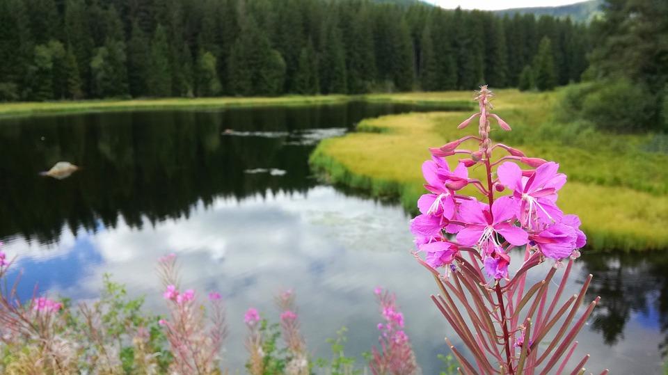 Lac Fleur Plantes Photo Gratuite Sur Pixabay