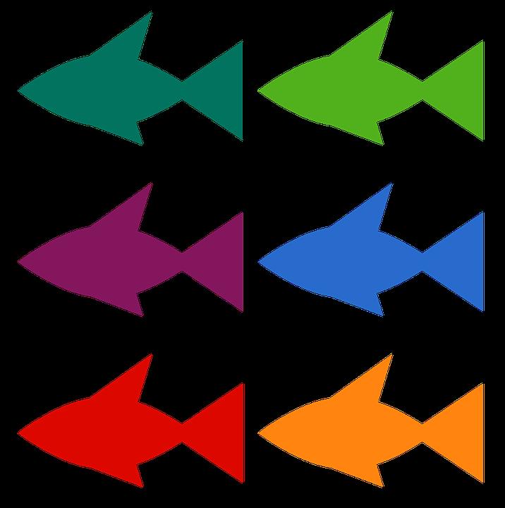 Ryby, Akwarium, Połowów, Karp, Fish, Rybki, Rekin, Mar