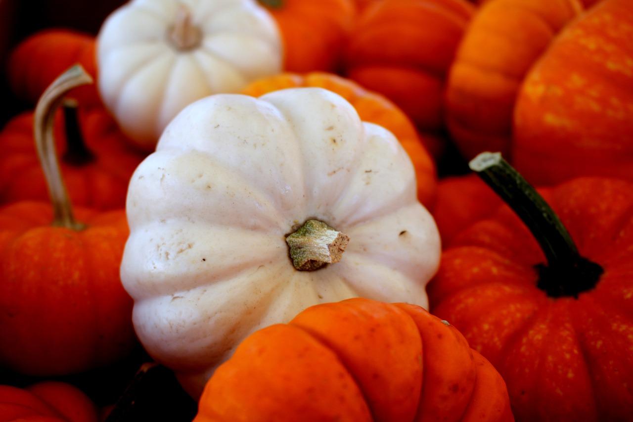 Casperita and Orangita pumpkins