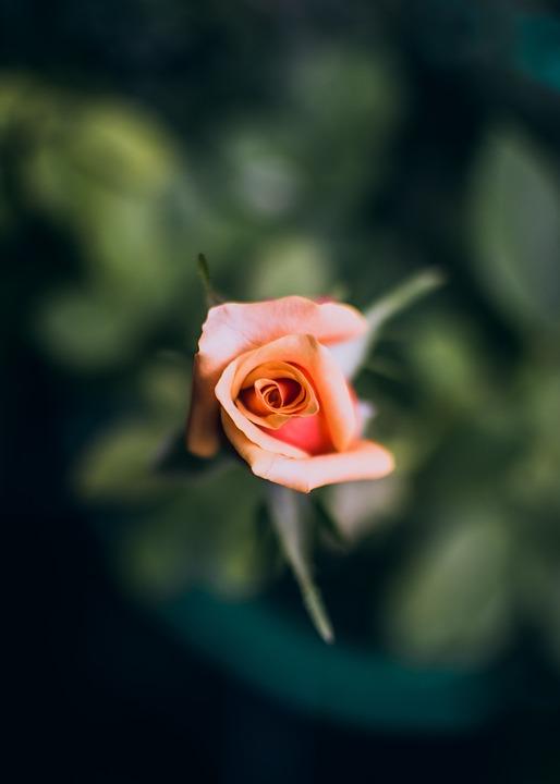 bloom flor hermosa foto gratis en pixabay