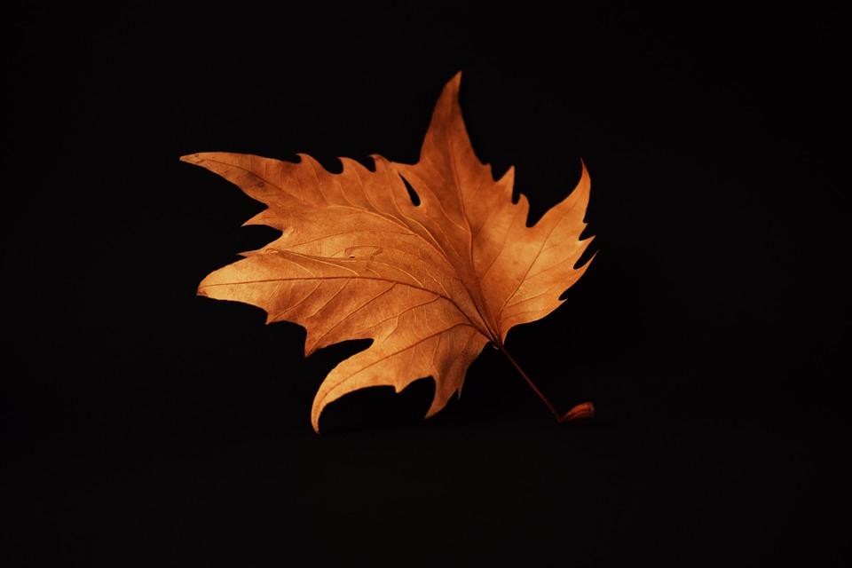 Autumn Leaf Black - Free photo on Pixabay