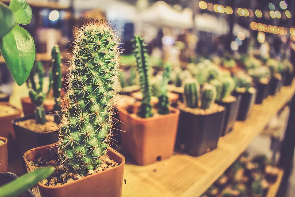 Pixabay : little flower pots - startupinsights.org