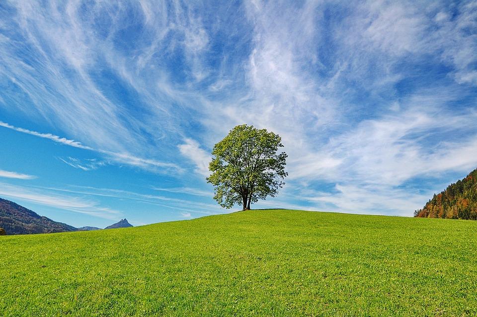 arbre ciel nature nuages paysage lautomne - Arbre Ciel
