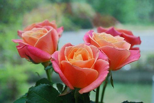Rosen, Blumenstrauß, Blumen, Rose