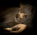 motherhood, cub, lioness