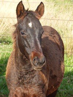 3+ Free Quarter Mile & Horse Photos - Pixabay